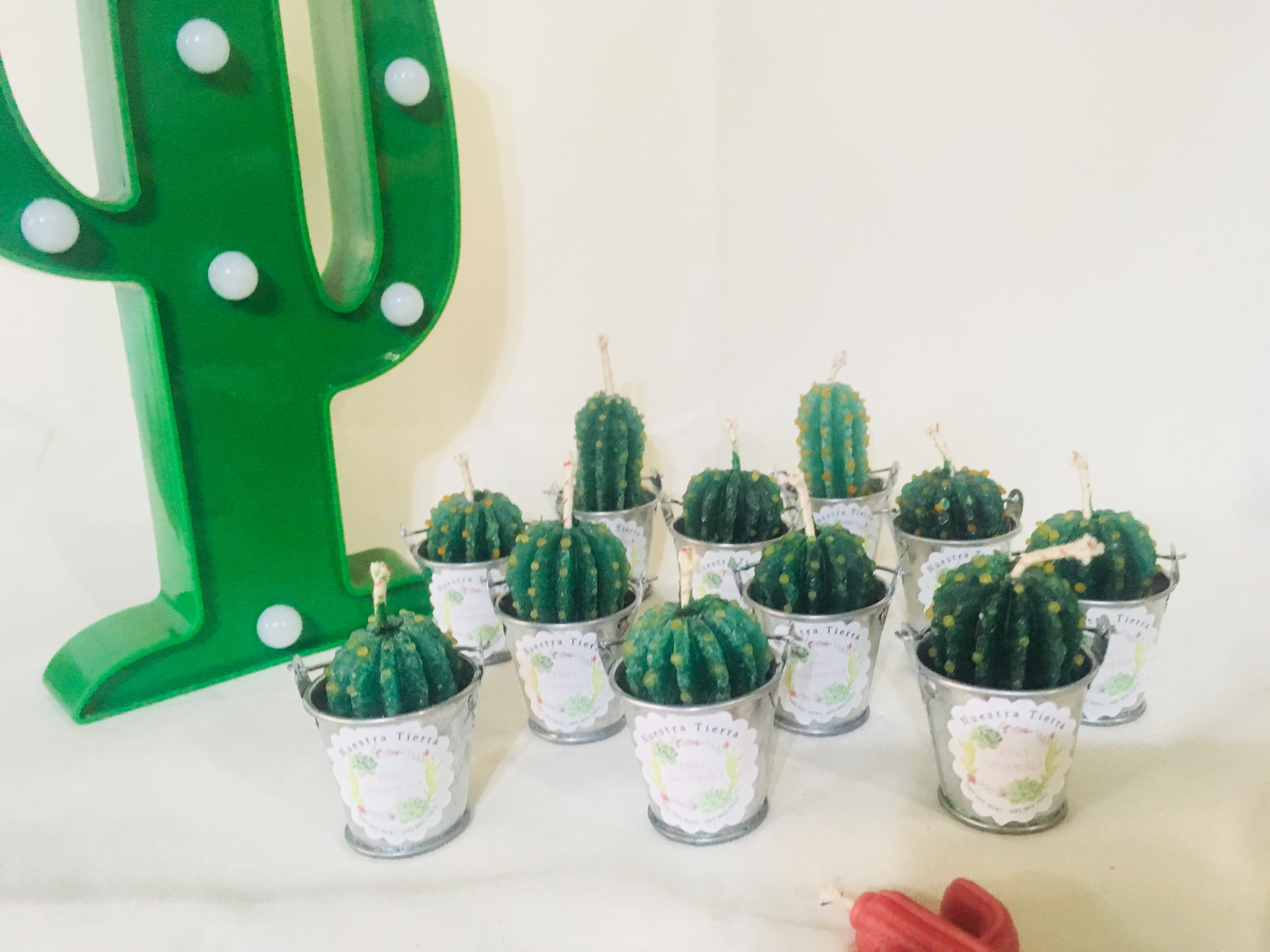 Velas Cactus