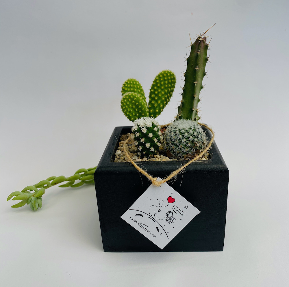 Minijardin de cactus