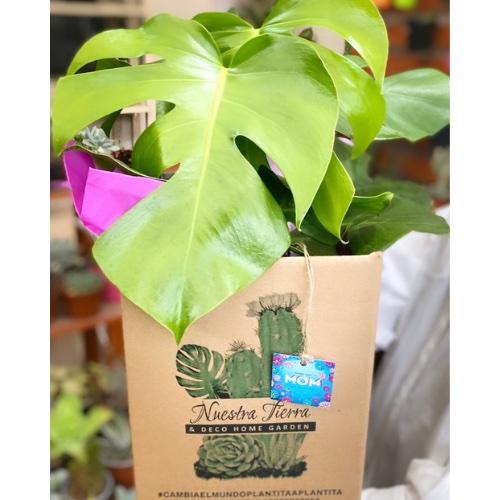 Plantgift